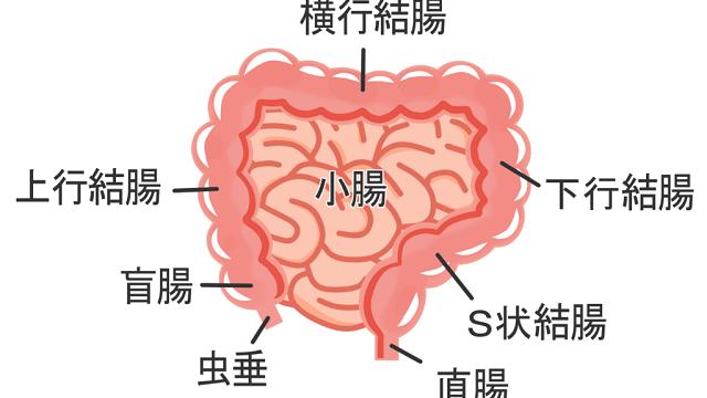 大腸の構造のイラスト